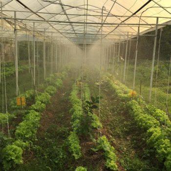 แปลงผักไร่ต้นรัก