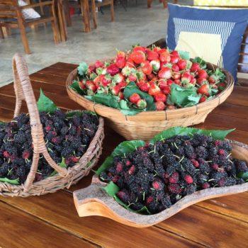 ไร่ต้นรักสเตอเบอร์รี่เมืองปัว